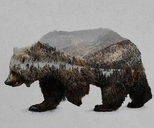 art, bear, and nature image