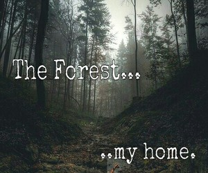alone, forest, and home image