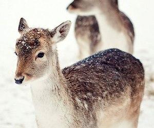 animal, snow, and cute image