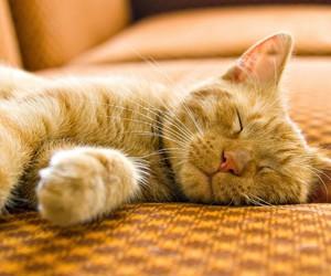 animals, sleep, and cute image