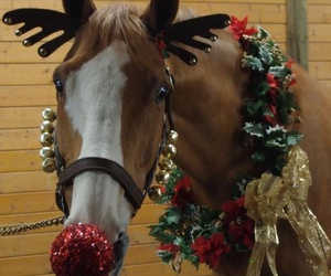 horse, christmas, and christmas horse image
