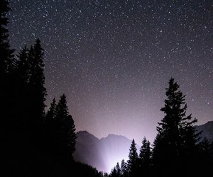 forest, sky, and stars image