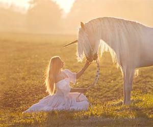 horse and unicorn image