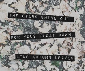 ed sheeran, autumn leaves, and leaves image
