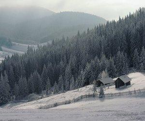 Carpathian, pines, and romania image