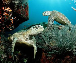 turtle, animals, and photography image