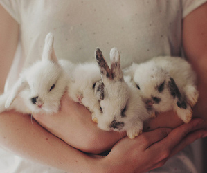 animals, vintage, and bunny image