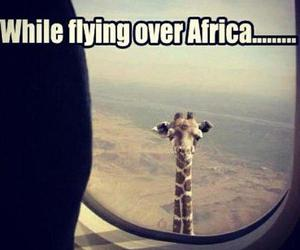 africa, giraffe, and funny image