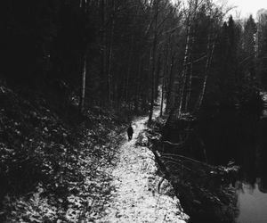 autumn, black, and black and white image