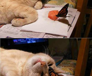cat, butterfly, and cute image