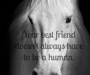 horse, love, and always image