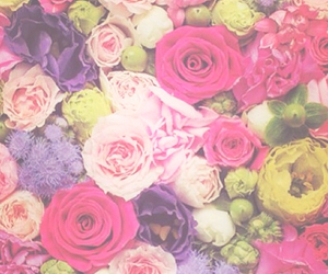 flower, rose, and cute image
