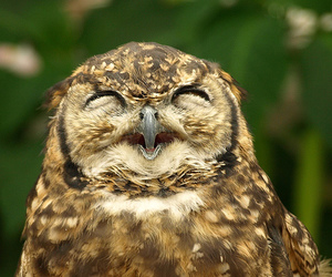 owl, animal, and smile image