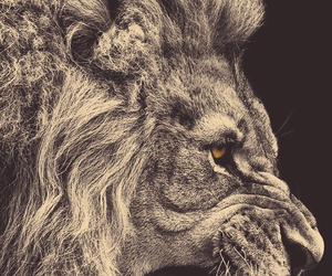 big cat, amazing, and lion image