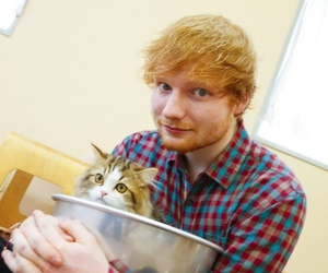 cat, ed sheeran, and ginger image