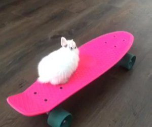 bunny, lol, and penny board image