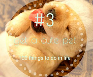 pet, cute, and 100 things to do in life image