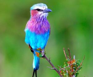 bird image