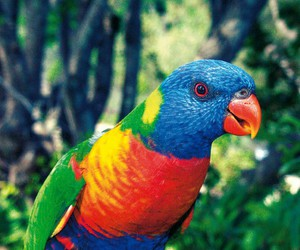 bird and colours image