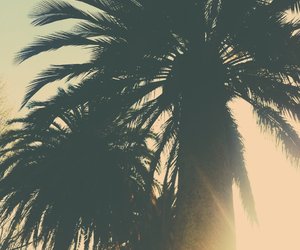 chile, day, and palm tree image
