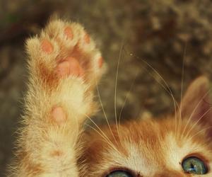 cat, cute, and pretty image