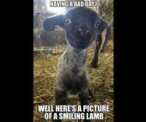 funny, vegan, and bad image