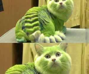 cat, funny, and green image