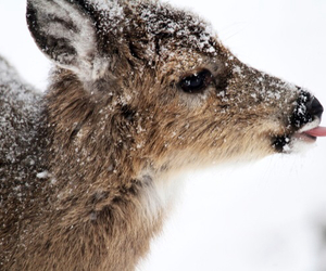 snow, cute, and deer image