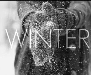 christmas, magic, and winter image