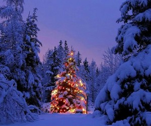evening, christmas tree, and winter image