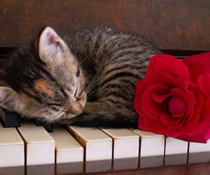 cat, piano, and rose image