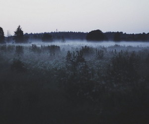 nature, forest, and grunge image