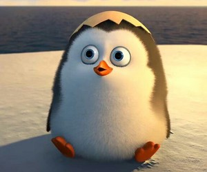 cute and penguin image