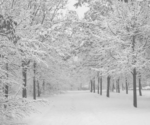 snow, winter, and december image