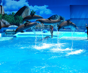 dolphin and water image