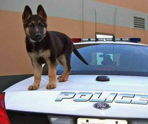 dog, cute, and police image
