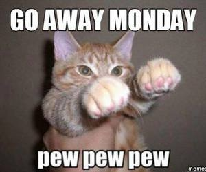 cat, funny, and monday image