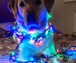 christmas, dog, and labrador retriever image