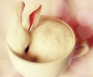 adorable, baby, and rabbit image