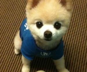 boo, dog, and cute image