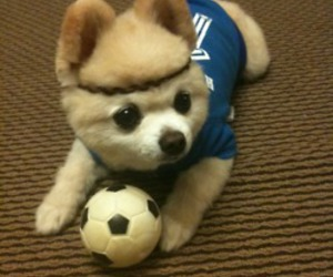 dog, football, and puppy image