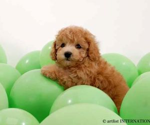ballons, green, and puppy image