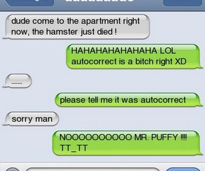 funny, hamster, and text image