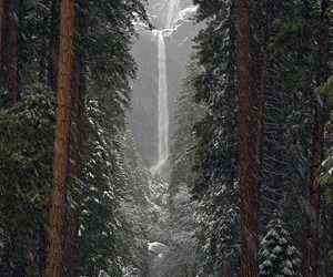 forest, landscape, and waterfall image