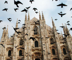 bird, milan, and italy image