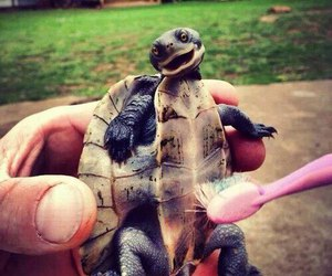 turtle, animal, and smile image