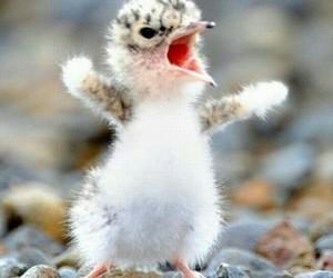 cute, bird, and animal image