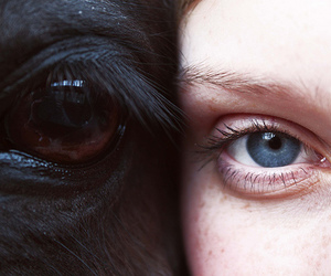 horse, eyes, and animal image