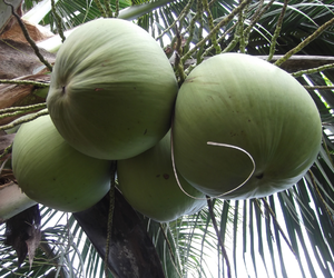 coconut, delicious, and green image