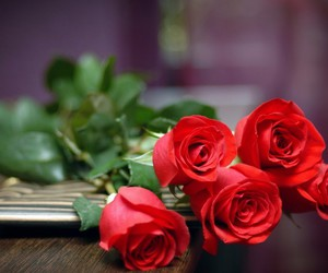 flowers hd wallpapers, red roses hd wallpapers, and red roses hd images image
